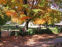 Sturbridge Fall Foliage_R